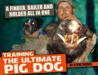 Training The Ultimate Pig Dog